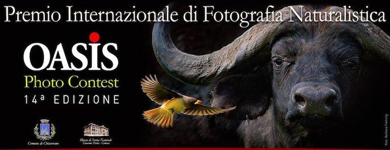 oasis photo contest